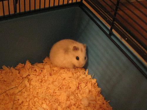 Hamster Treats at Home Pets at Home Hamster