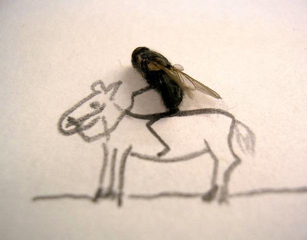 fly horseback