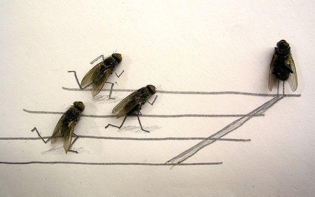 fly race