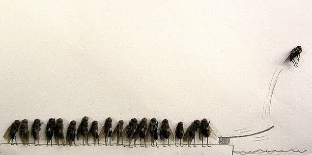 fly springboard