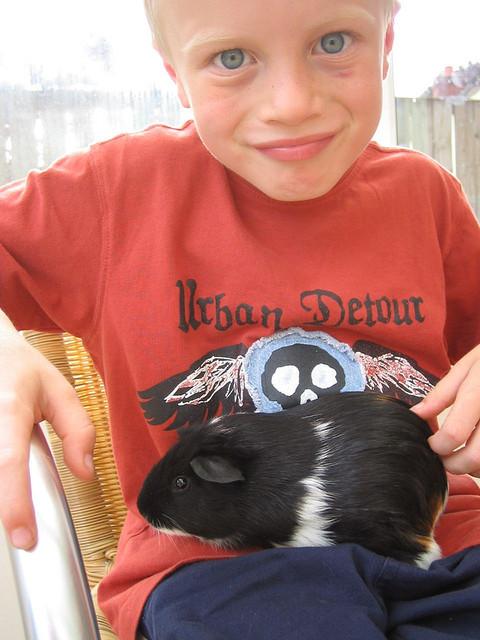 pinky guinea pig