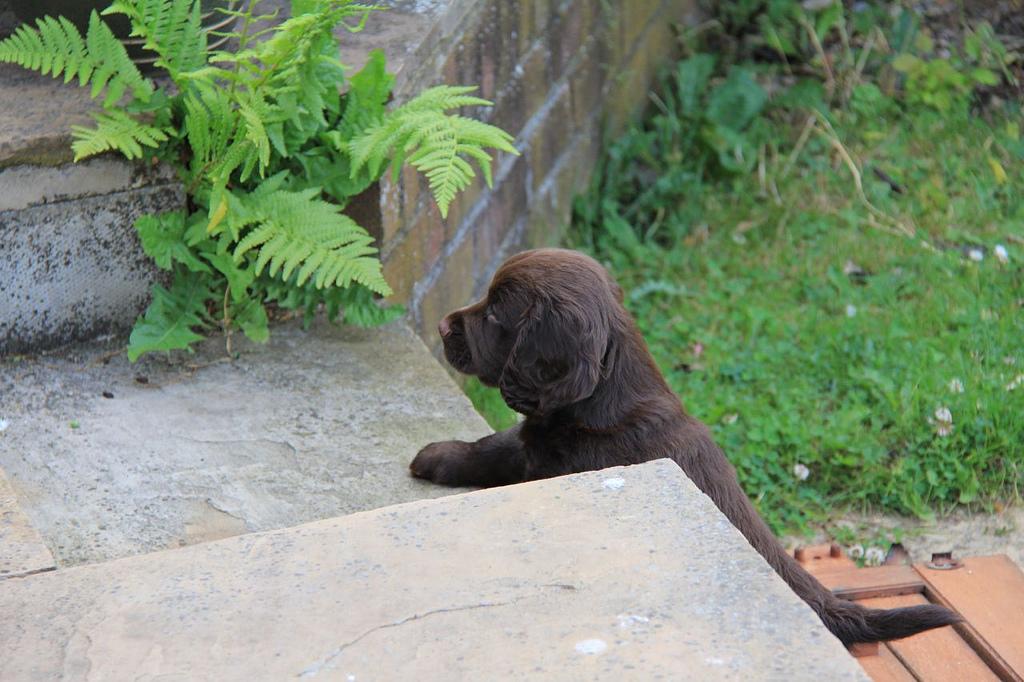 Cooper at the big steps