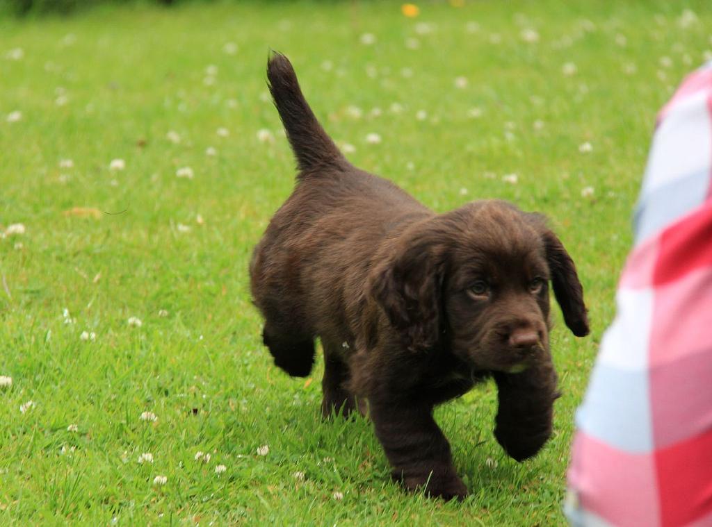 Cooper in the garden