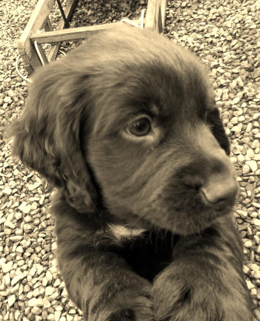 Cooper 7 weeks