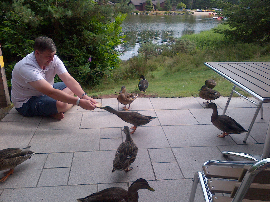 dave feeding ducks