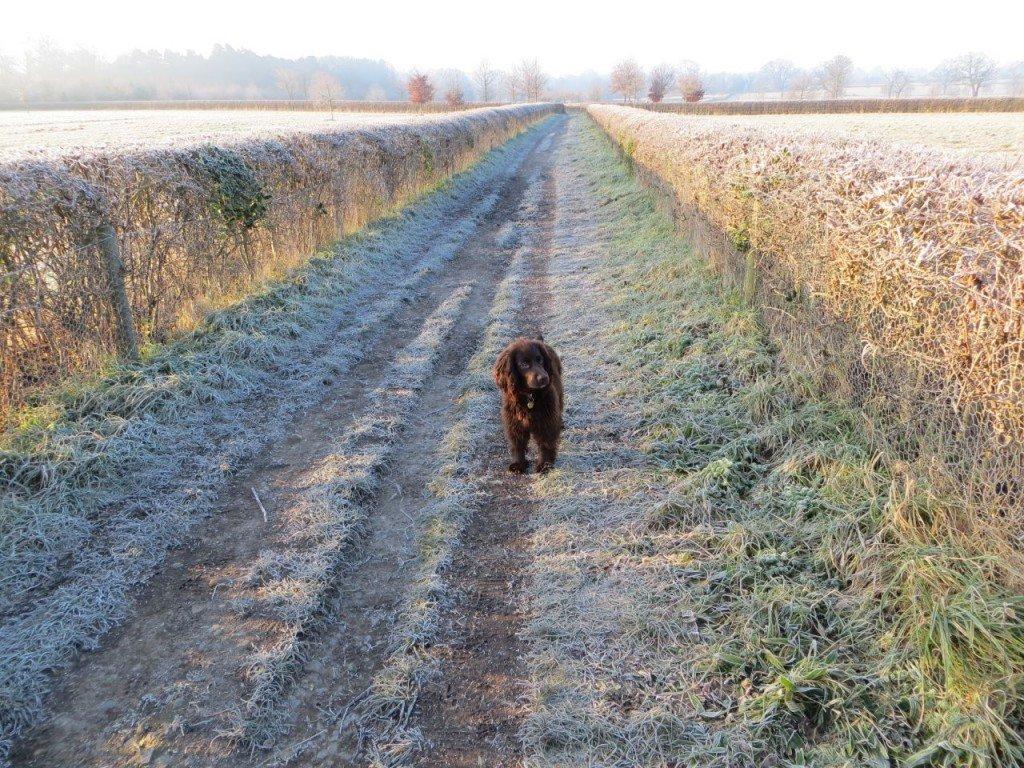 cooper walking in winter